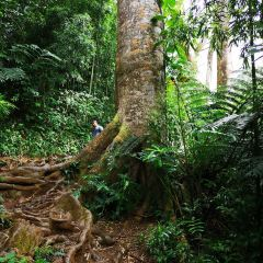 Penang National Park User Photo