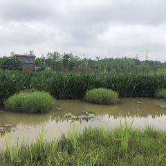 Yangshahu National Wetland Park 여행 사진