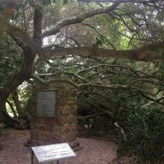 莫塞爾港郵政樹用戶圖片