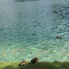 布萊德湖用戶圖片