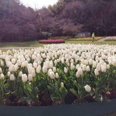 Hamanako Garden park User Photo