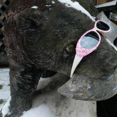 Showashinzan Bear Ranch User Photo