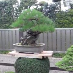 Bishopsford Bonsai Garden User Photo