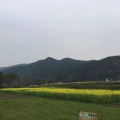 瀏陽高坪鎮油菜花觀賞基地用戶圖片