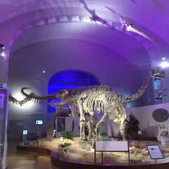 Finnish Museum of Natural History User Photo