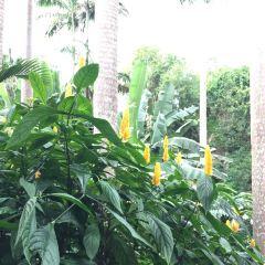Hunte's Gardens User Photo