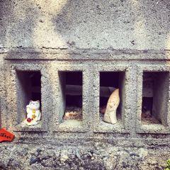 常滑市陶瓷器散步道用戶圖片