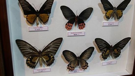 Taiwan Insect Museum