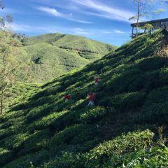 Cameron Valley Tea House 2用戶圖片
