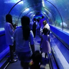 Xuzhou Aquarium Exhibition Hall User Photo