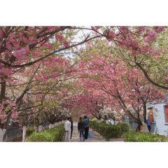 Jinhuijiu Culture Ecology Tourism Sceneic Area User Photo