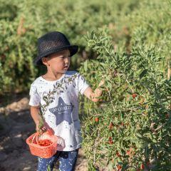 Nuomuhong Farm User Photo