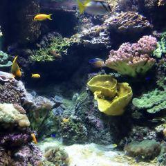拉羅謝爾水族館用戶圖片