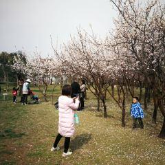 Zhuzhilin Park User Photo