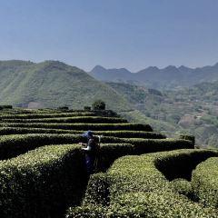 The Xixiang Tea Garden User Photo