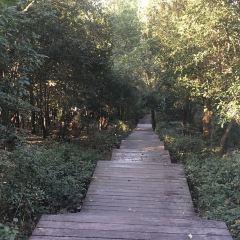潛山國家森林公園用戶圖片