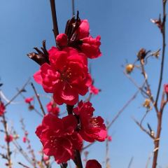 大嶺溝獼猴桃谷風景区のユーザー投稿写真