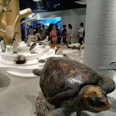 Fisheries Department Research Institute Aquarium User Photo