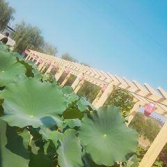 Baiquan Ecological Park User Photo