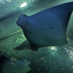 Qingdao Underwater World User Photo