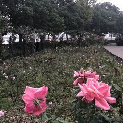 台北市成功高中昆蟲博物館用戶圖片