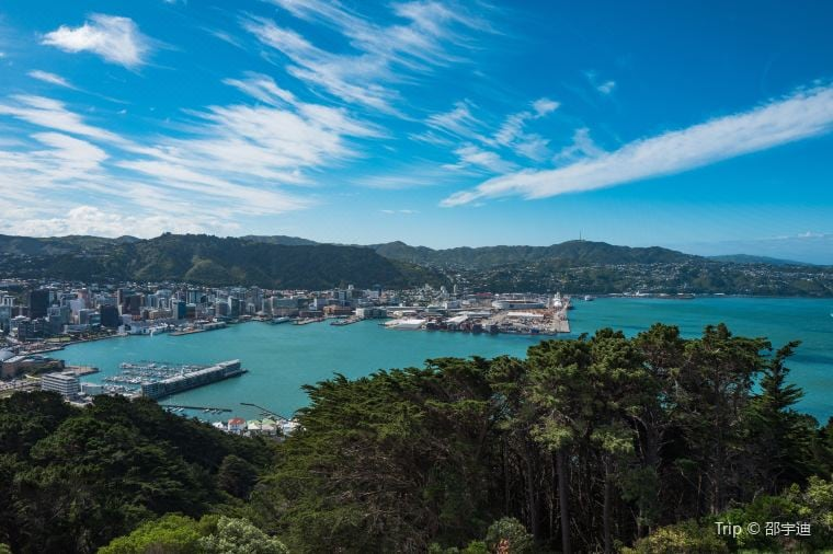 Hiking or Surfing: Travel for Nature Near Wellington New Zealand