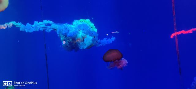 正佳極地海洋世界