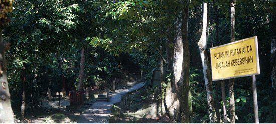 甘清雨林瀑布
