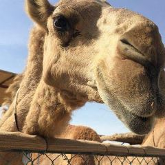 The Camel Farm User Photo