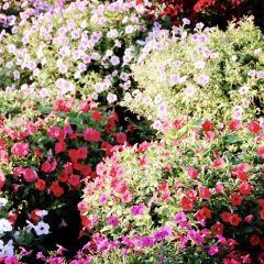 Dubai Garden Glow User Photo