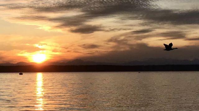 尼甘布瀉湖