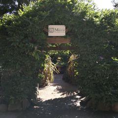 Ashcombe Maze & Lavender Gardens User Photo