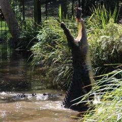 大衛·弗利野生動物園用戶圖片