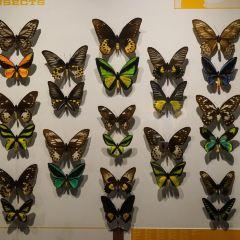 蒙特利爾昆蟲館用戶圖片
