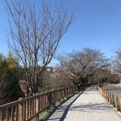 Inuyama Castle User Photo