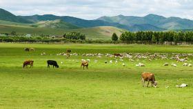 內蒙古運動活動