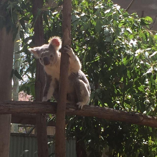 大衛·弗利野生動物園