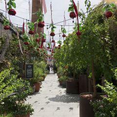 The Grounds of Alexandria User Photo