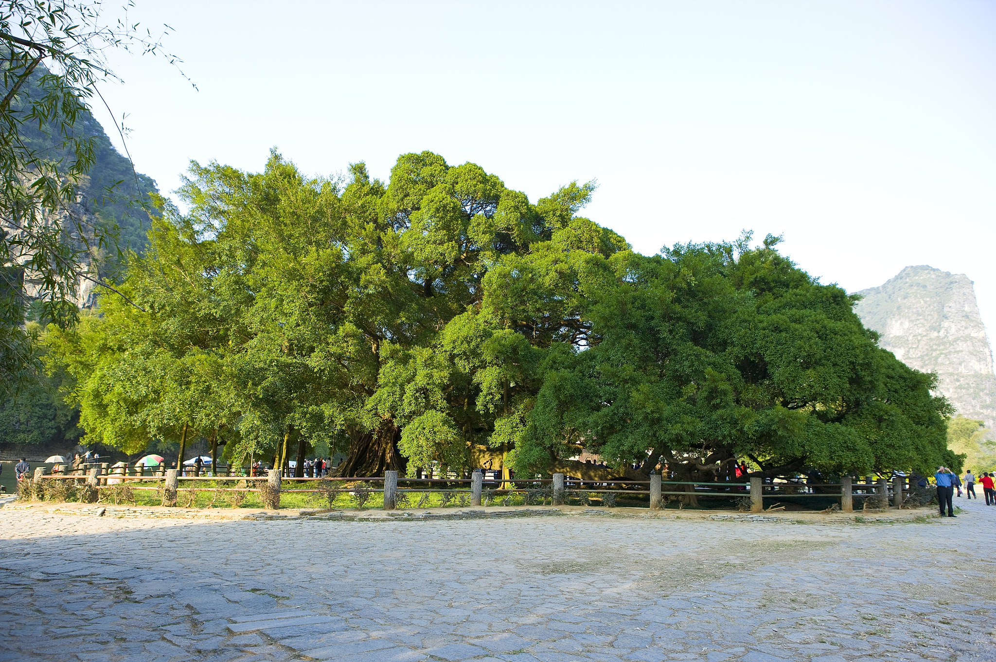 The Grand Banyan Tree + The Moon Mountain Scenic Area Ticket