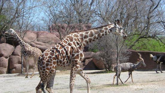聖路易士動物園