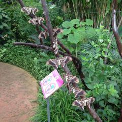 Butterfly Park of Benalmadena User Photo