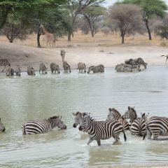 Tarangire National Park User Photo