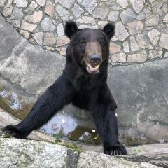 Shanghai Zoo User Photo
