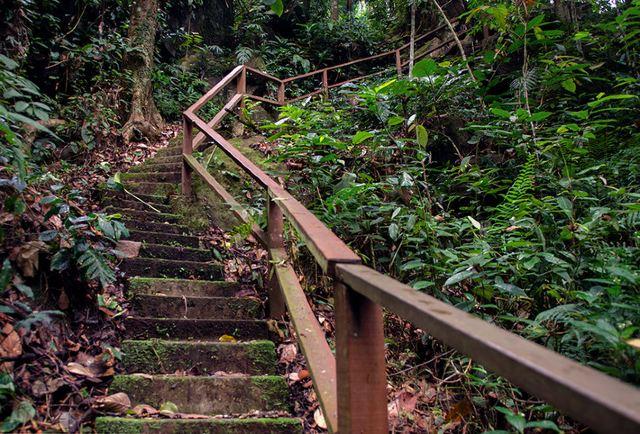烏魯龐森林保護區