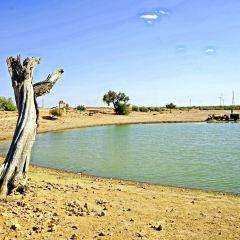 塔爾沙漠用戶圖片