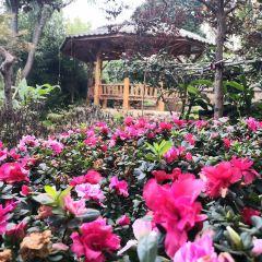 Dalicang Mountain Botanical Garden User Photo