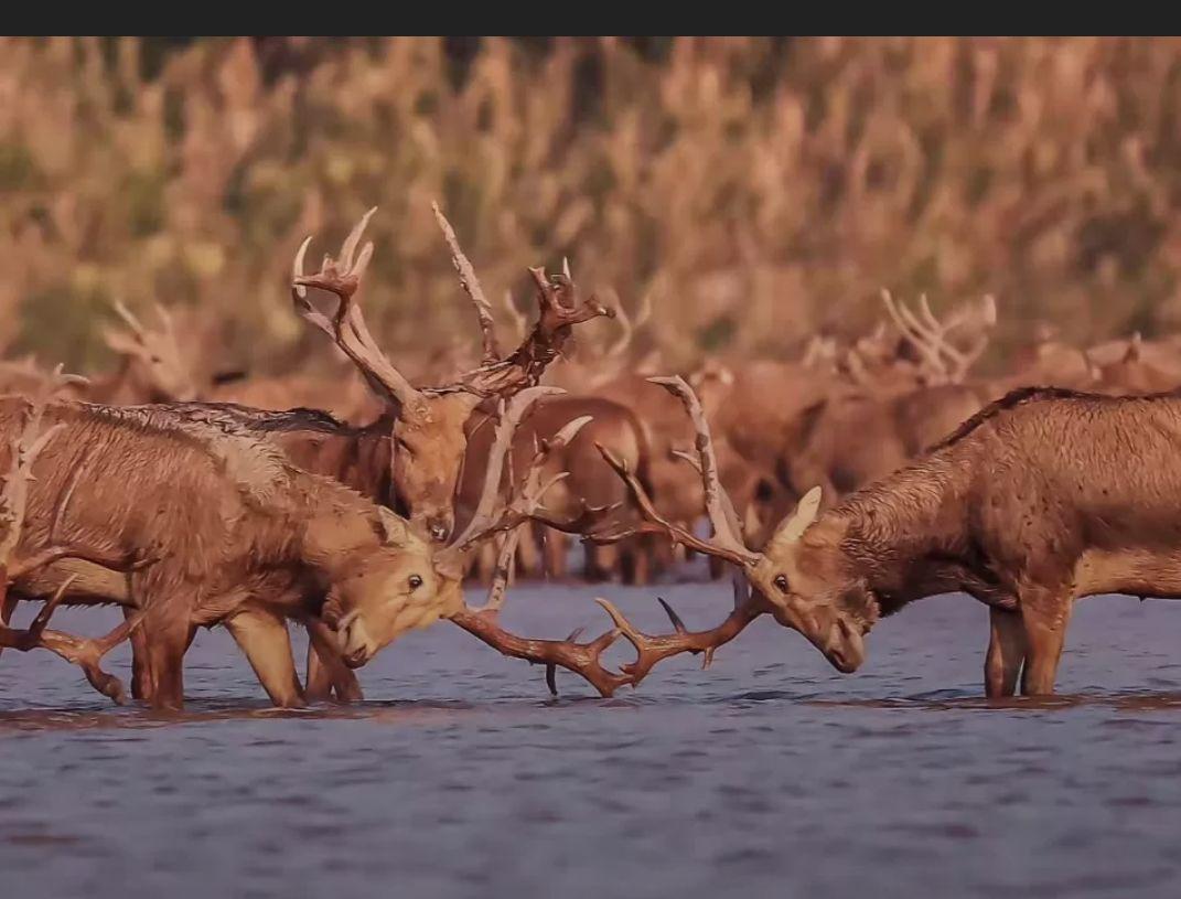 麋鹿國家級自然保護區