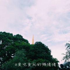 東長寺 福岡大佛用戶圖片