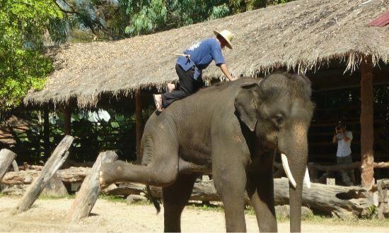 Meidan Elephant Camp