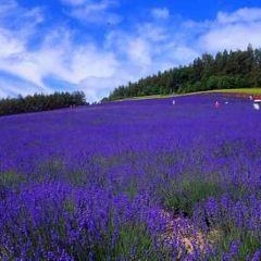 Highland Furano User Photo